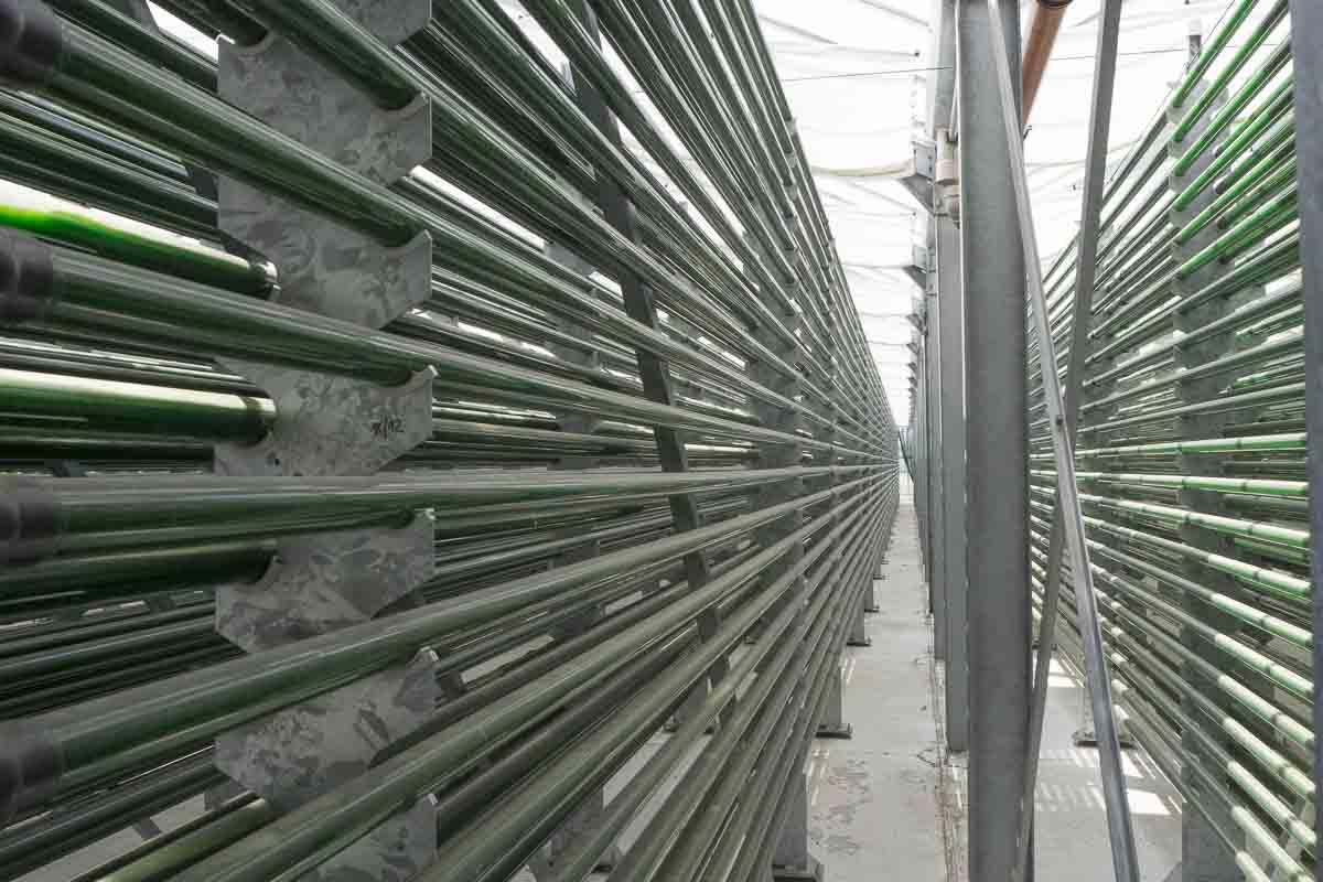Glasrohre auf der Algenfarm